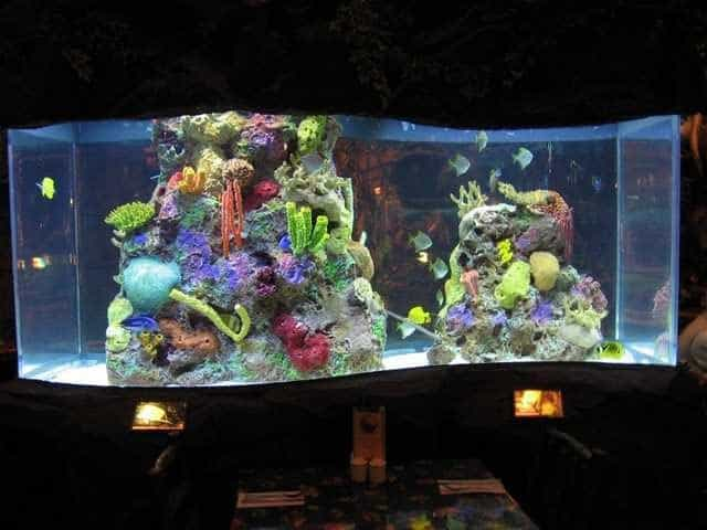 City Stars Mall Rainforest Cafe Akrilik Akvaryumlar